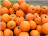 View of group of pumpkins